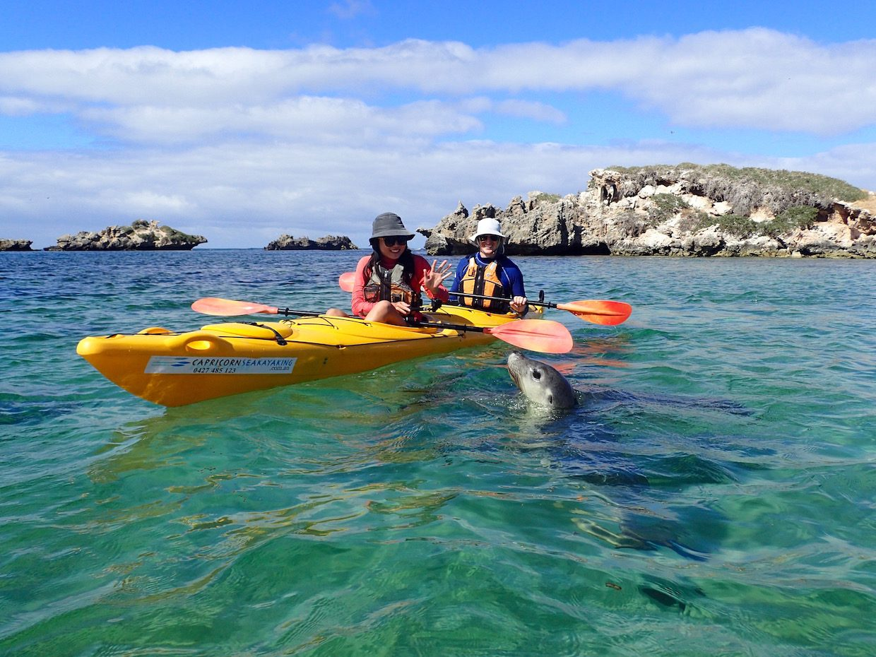 Penguin and Seal Island, Sea kayak tour, eco tour, perth, western australia, rockingham, wild encounters, capricorn sea kayaking