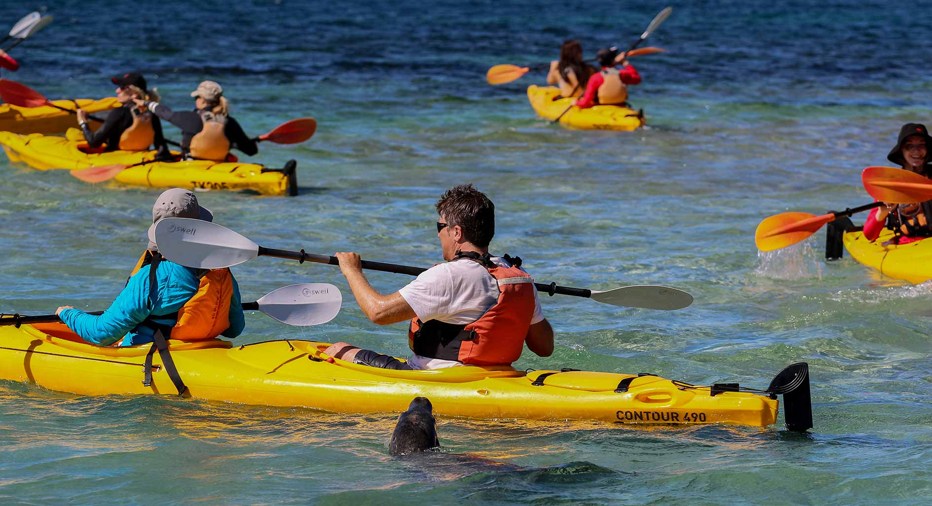 Corporate programs, social programs, sea kayaking tour, corporate tour, team building, corporate adventure, corporate activity, social groups, tour for social groups